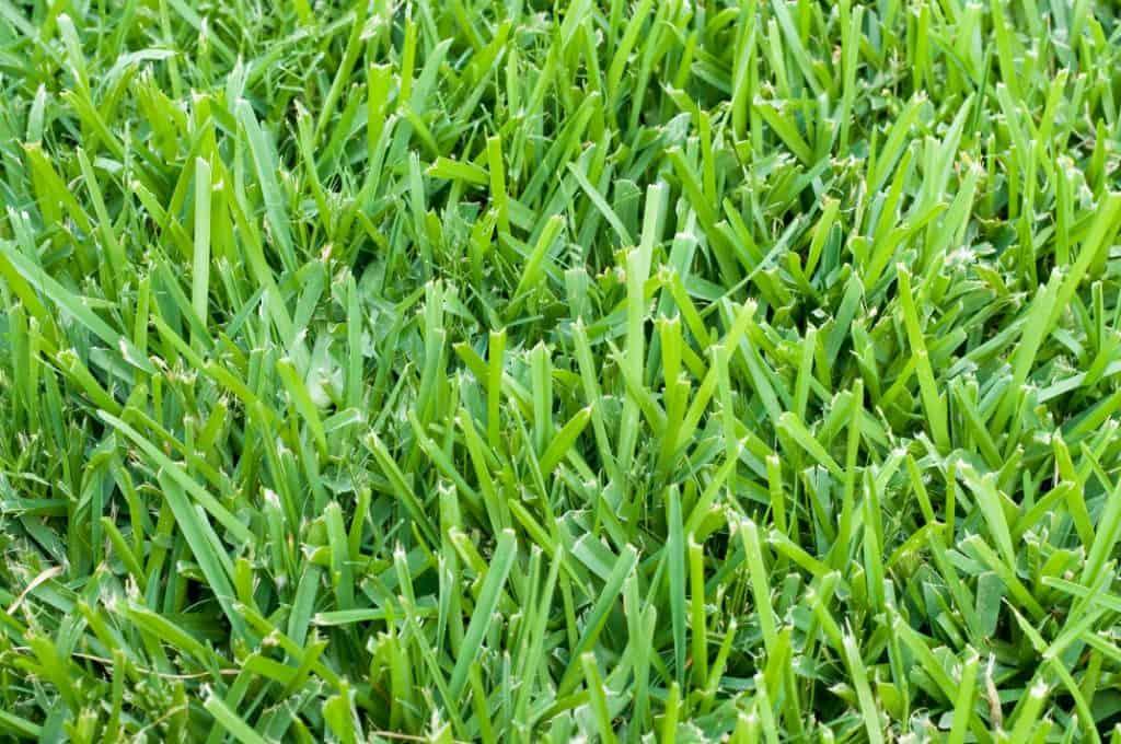 Lawn Maintenance Cape Coral Southwest Florida