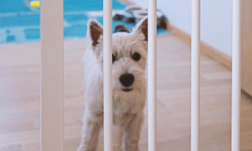 best fence for homes with dogs