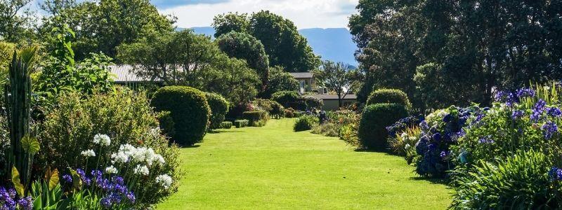 beautiful and healthy lawn through hydroseeding