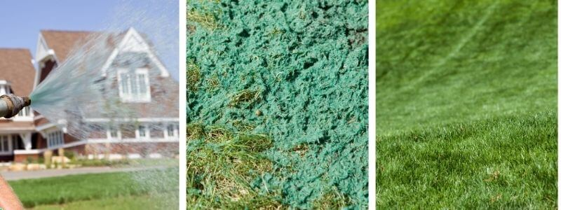hydroseeding all you need to know